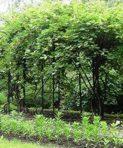Стебель и ствол растения. Фотографии