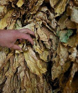 Листья растений. Фотографии