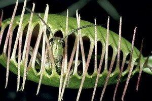 Виды хищных растений с названиями и фото. Фотографии
