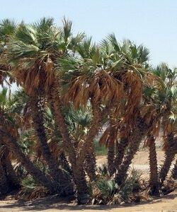 Священные деревья: фото и интересные факты. Фотографии