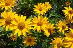Технические культурные растения и их фото. Фотографии
