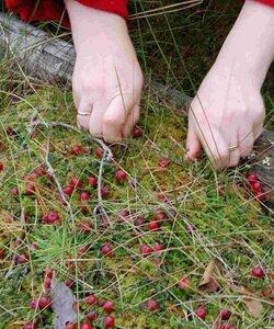 Как образуются болота и что на них растет. Фотографии
