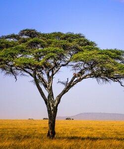 Интересные факты о саваннах и пустынях. Фотографии