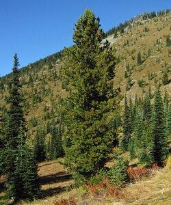 Охраняемые территории: заповедники и национальные парки. Фотографии