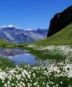 Альпийские луга и горы Гималаи. Фотографии