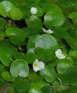 Водные и прибрежные цветы: фото, названия и описание. Фотографии