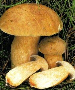 Вкусные салаты с фасолью и грибами рецепты с фото