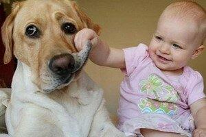 Как быть, когда мы ждем ребенка, а в доме живет собака?. Фотографии