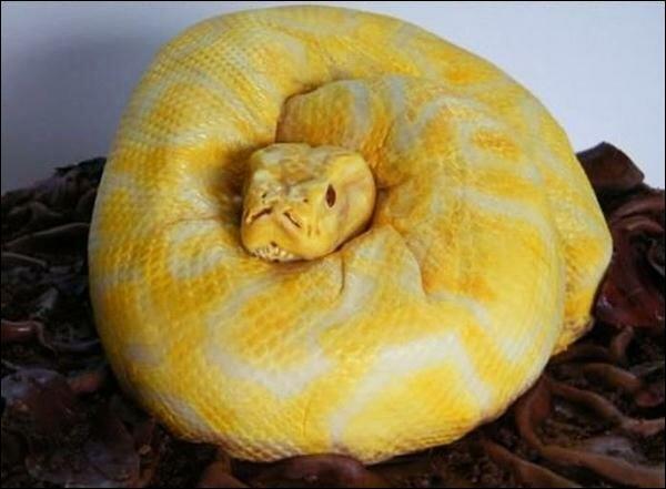 snake cake02 (600x441, 33Kb)